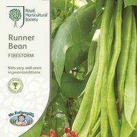 Product photograph showing Bean Runner Firestorm Approx 40 Seeds