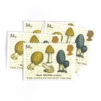 5 x Morel Mushroom UNused GB Mint MNH 34p Vintage 1988 British Postage Stamps  Linnean Society  Mushrooms  for sending mail, crafts - Mushroom Gifts