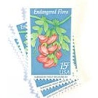 10 x UNused 1979 Hawaiian Wild Broadbean Pink Blue 15 cent Vintage Endangered Flora Flowers US Postage Stamps - Hawaiian Gifts