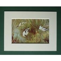 1930s Antique Matted Ornithology Picture of Avocet Wading Birds by Natural History Artist George Edward Collins - Artist Gifts