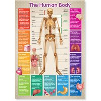 A3 Laminated Educational Poster Human Body Skeleton Teaching Resource - Educational Gifts