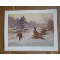 Wild Bird Art Collection. Archibald Thorburn, Victorian Wildlife Artist, Limited edition prints collection - Artist Gifts