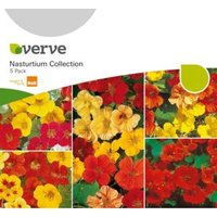 Verve Nasturtium Seeds  Collection Mix