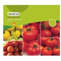 Verve Tomato Seeds
