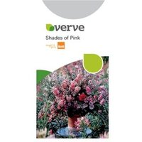 Verve Shades Of Pink Seeds
