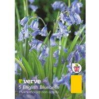 English bluebell Hyacinthoides non-scipta Bulbs