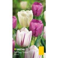 Flag tulip Mixed Bulbs