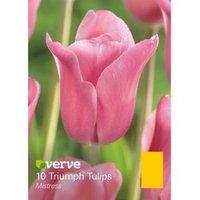 Tulip Mistress Bulbs