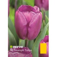 Triumph tulip Purple flag Bulbs
