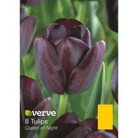Tulip Queen of night Bulbs