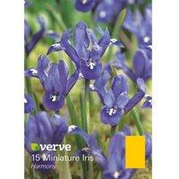 Miniature iris Harmony Bulbs