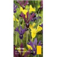 Miniature iris Mixed Bulbs
