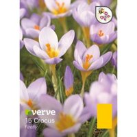 Crocus Firefly Bulbs