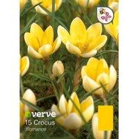 Crocus Chrysanthus romance Bulbs