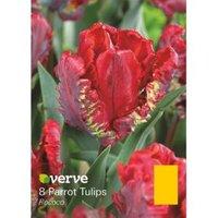 Parrot tulip Rococo Bulbs