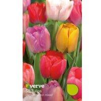 Tulip Darwin hybrid mixed Bulbs