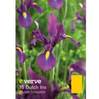 Dutch iris Purple sensation Bulbs