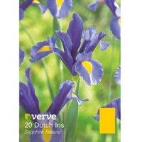 Dutch iris Sapphire beauty Bulbs
