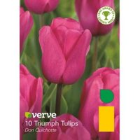 Triumph tulip Don quichotte Bulbs