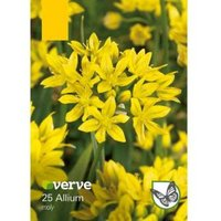 Allium Moly Bulbs  Pack of 25
