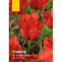 Dwarf Tulip Red Riding Hood Bulbs  Pack of 10