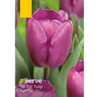 Tall Tulip Purple Flag Bulbs  Pack of 10