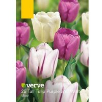 Tall Tulip Purple and white mix Bulbs  Pack of 25
