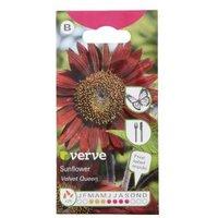 Verve Velvet queen sunflower Seed