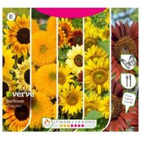Verve Sunflower collection Seed
