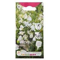 Verve Sweet pea Seed