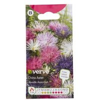 Verve China aster needle Seed