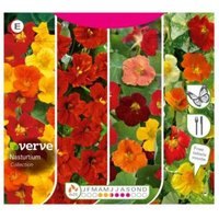Verve Nasturtium collection Seed