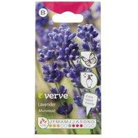 Verve Munstead lavender Seed