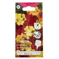 Verve Wallflower Fair Lady Seed