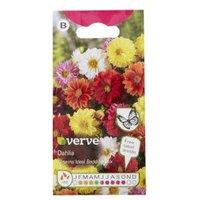 Verve Dahlia Unwins Mixed Seed