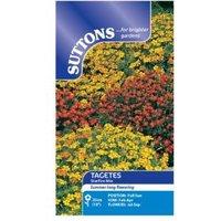 Suttons Tagetes Tenuifolia Seeds  Starfire Mix