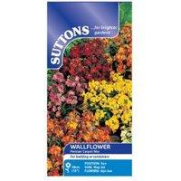 Suttons Wallflower Seeds  Persian Carpet Mix
