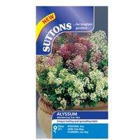 Suttons Alyssum Seeds  Wandering Star Mix