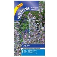 Suttons Salvia Sclarea Seeds  Euphoria Mix