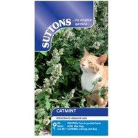 Suttons Catmint Seeds