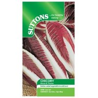 Suttons Chicory Seeds  Rossa di treviso
