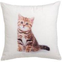 Cat Multicolour Cushion