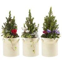 Assorted flower Metal Churn planter
