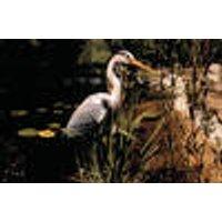 Heron pond ornament Westfalia