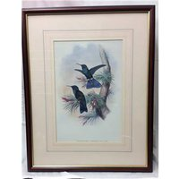 Collection of 9 prints with Tropical Birds REDUCED!!! £229.00