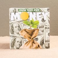 Grow Your Own Money Plant - Grow Your Own Gifts