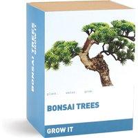 Grow It - Bonsai Trees Gift Box