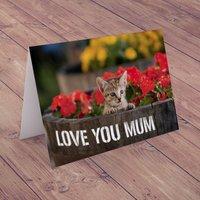 Personalised Card - Kitten In Flowers - Kitten Gifts