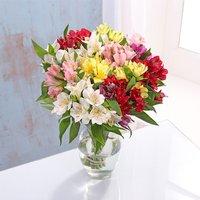 Alstroemeria Bouquet - Bouquet Gifts