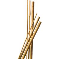 Bamboestok naturel H60cm dia. 6-8mm set a 10 stuks